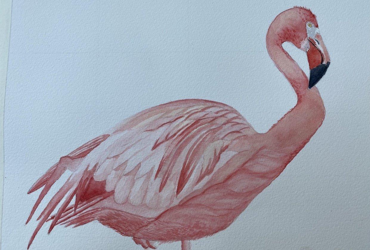 Flamingo - student project