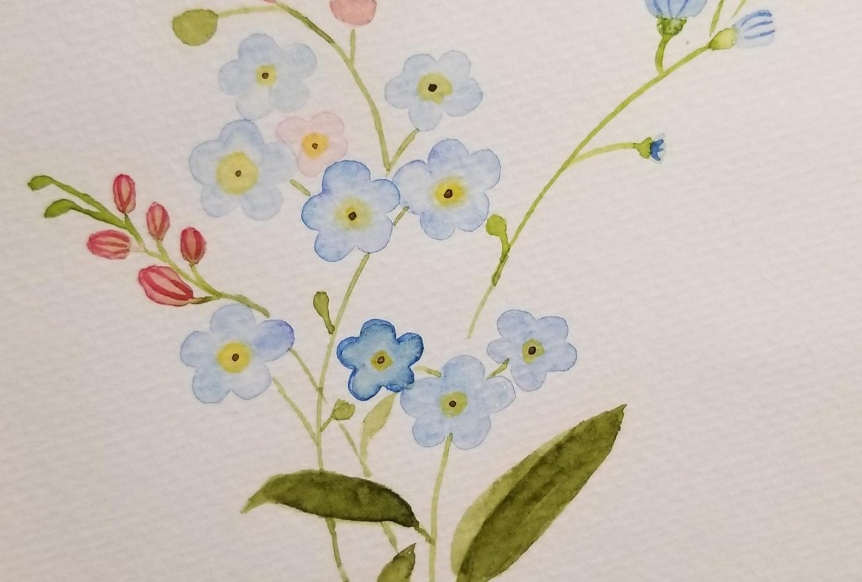 Forget-me-nots - student project