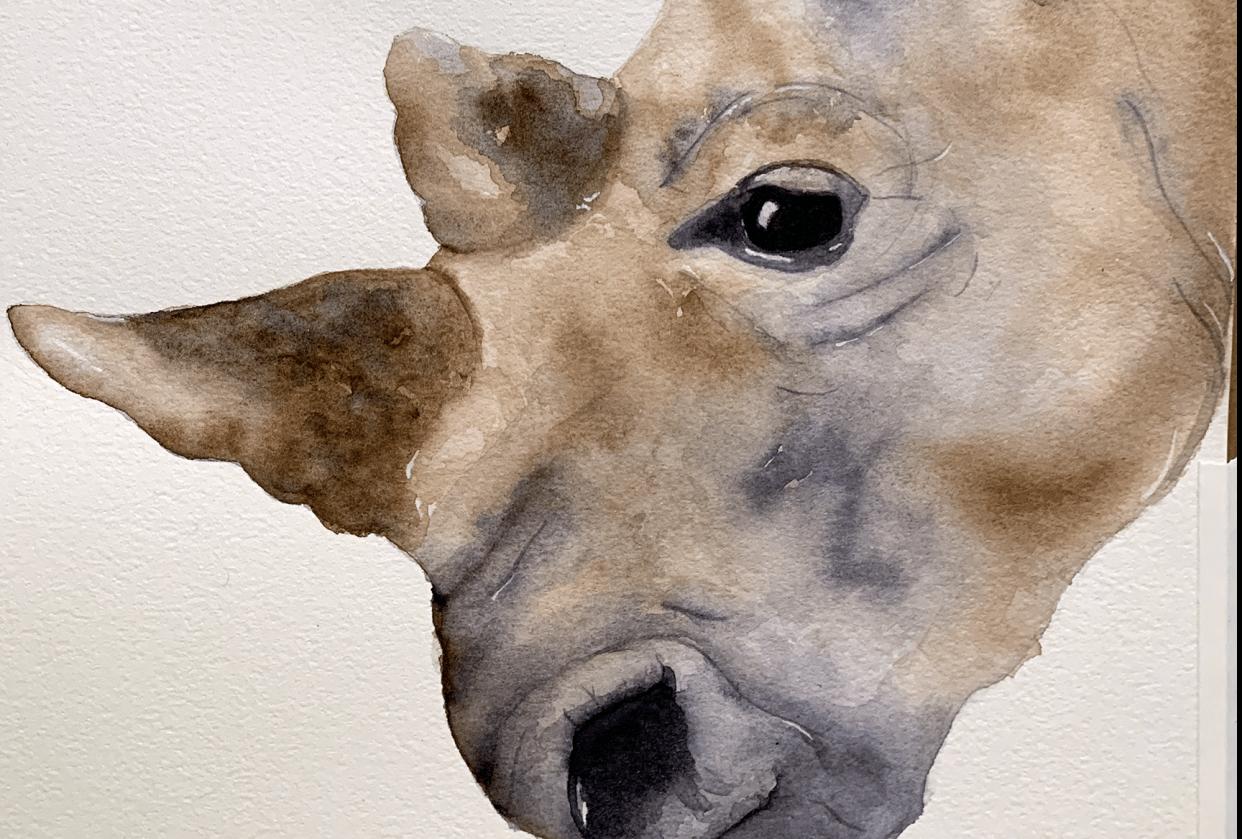 White Rhino - student project