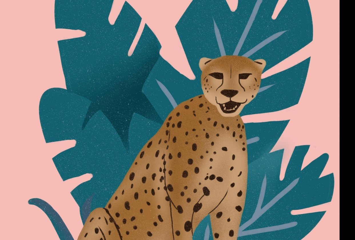 Cheetah illustration - student project