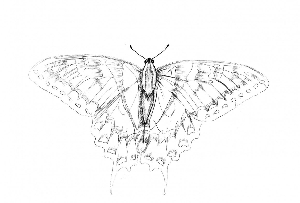 Butterfly project - student project