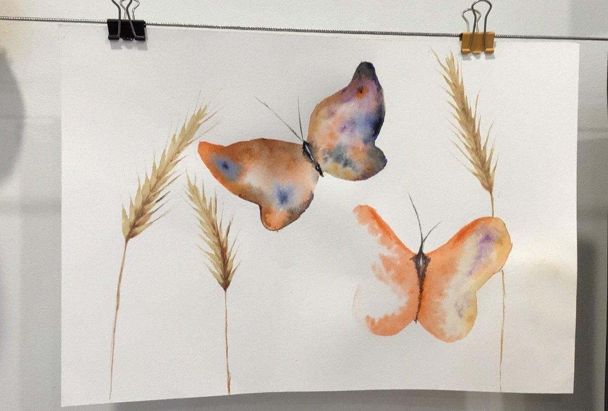 Butterflies in wheat field - student project