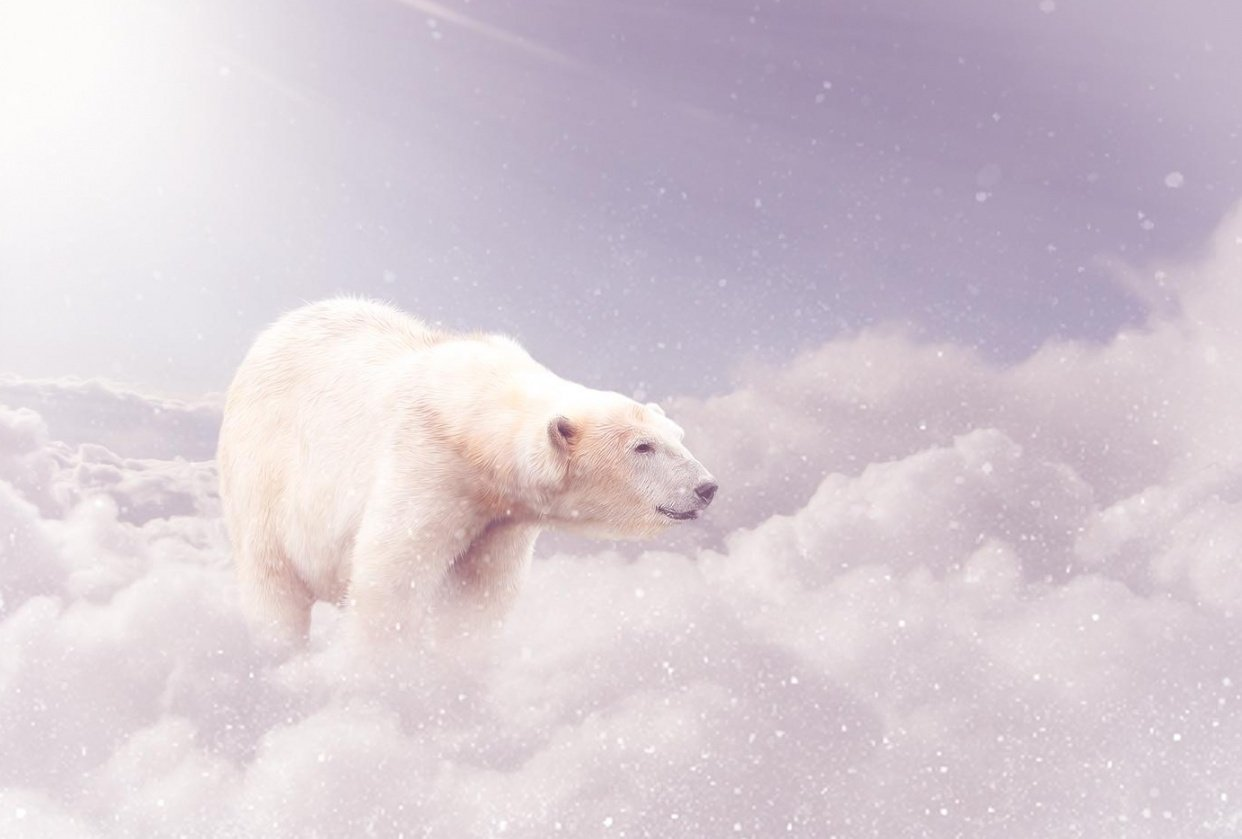 Dreamy Bear - student project