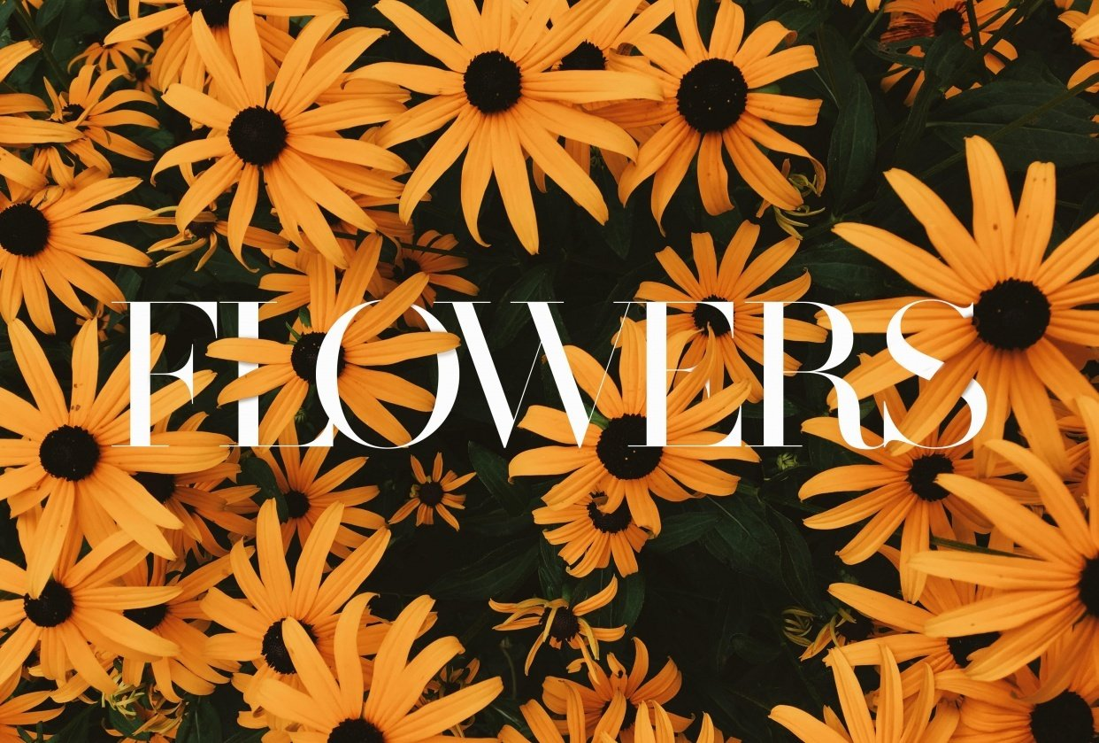 Sunflowers - student project