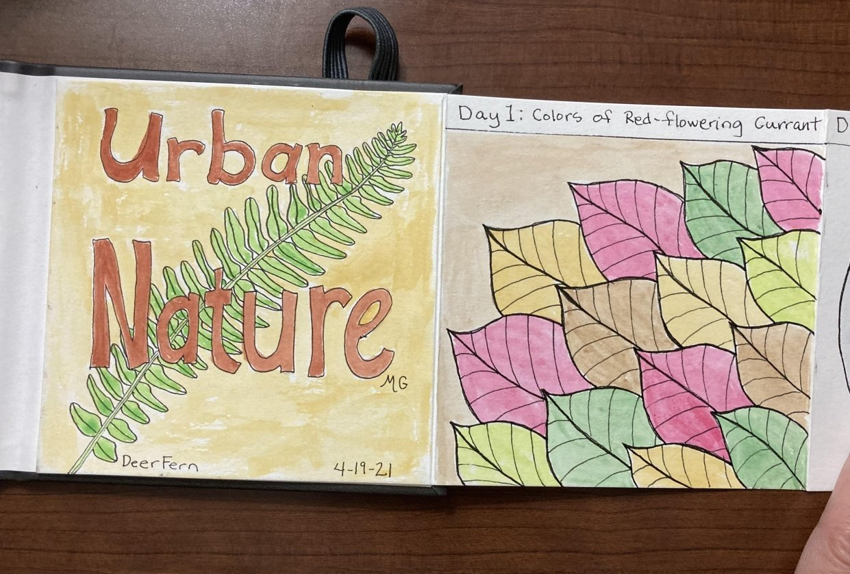 Urban nature journaling - student project