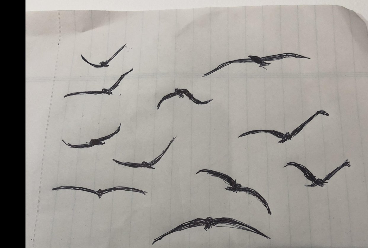 Bird paintings - student project