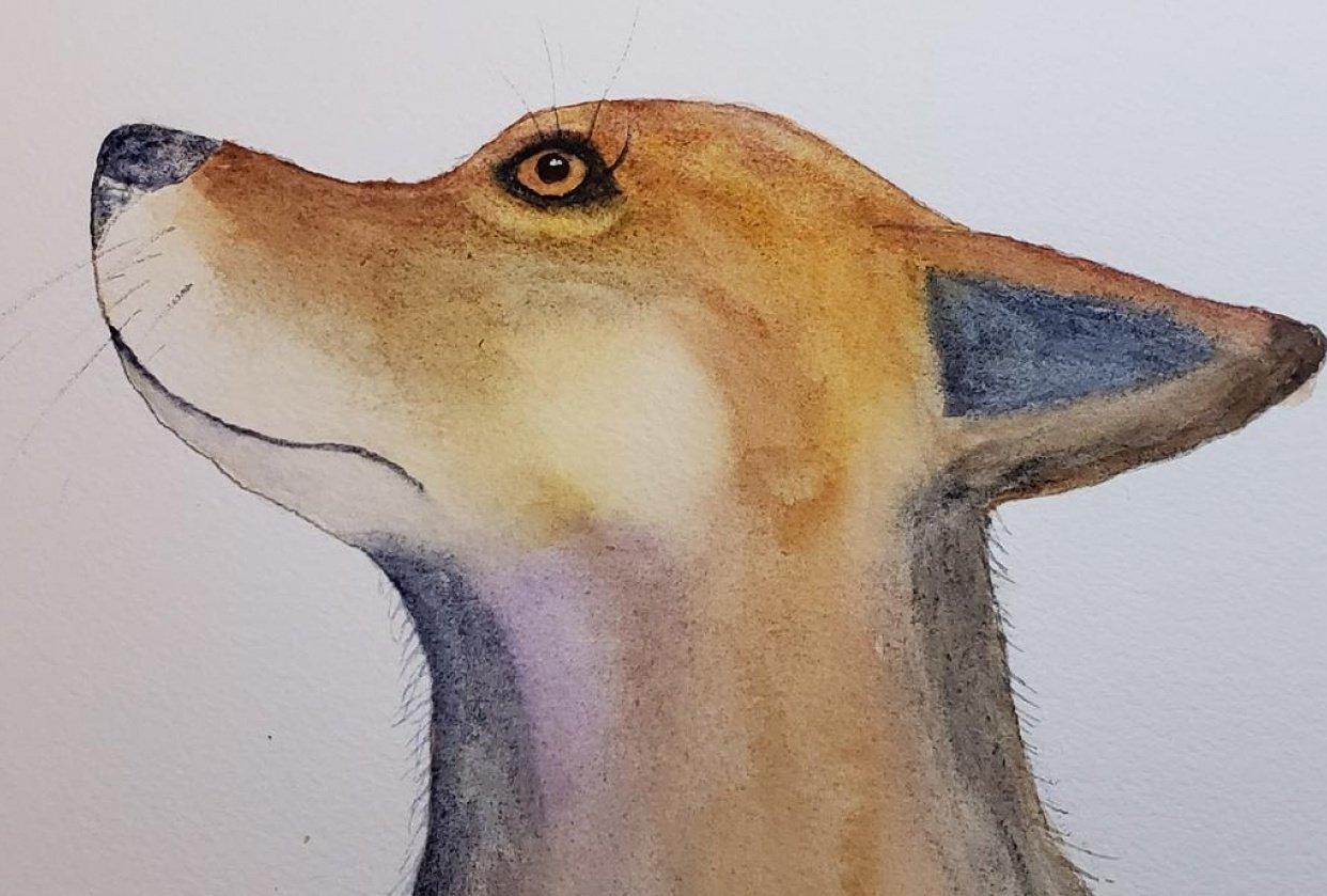 Gloria the fox - student project