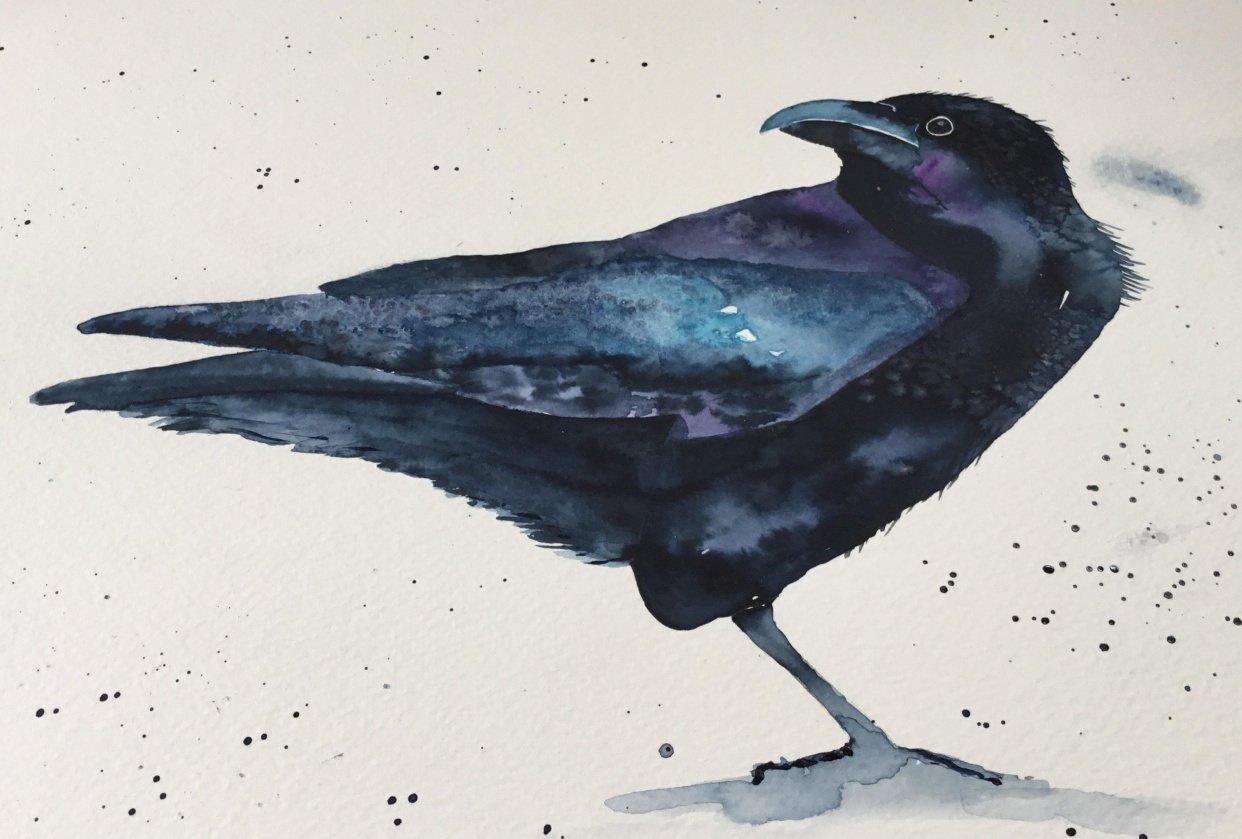 Gorgeous raven! - student project