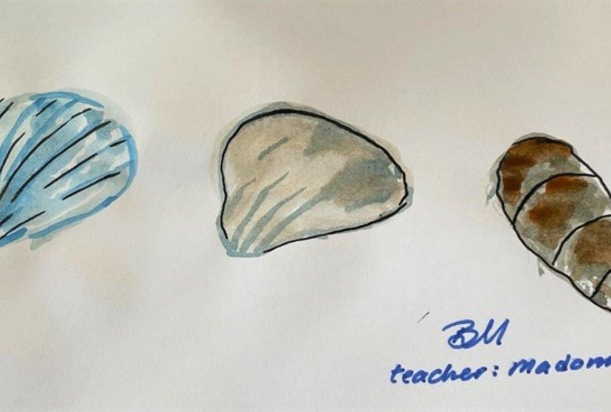 Sea shells - student project