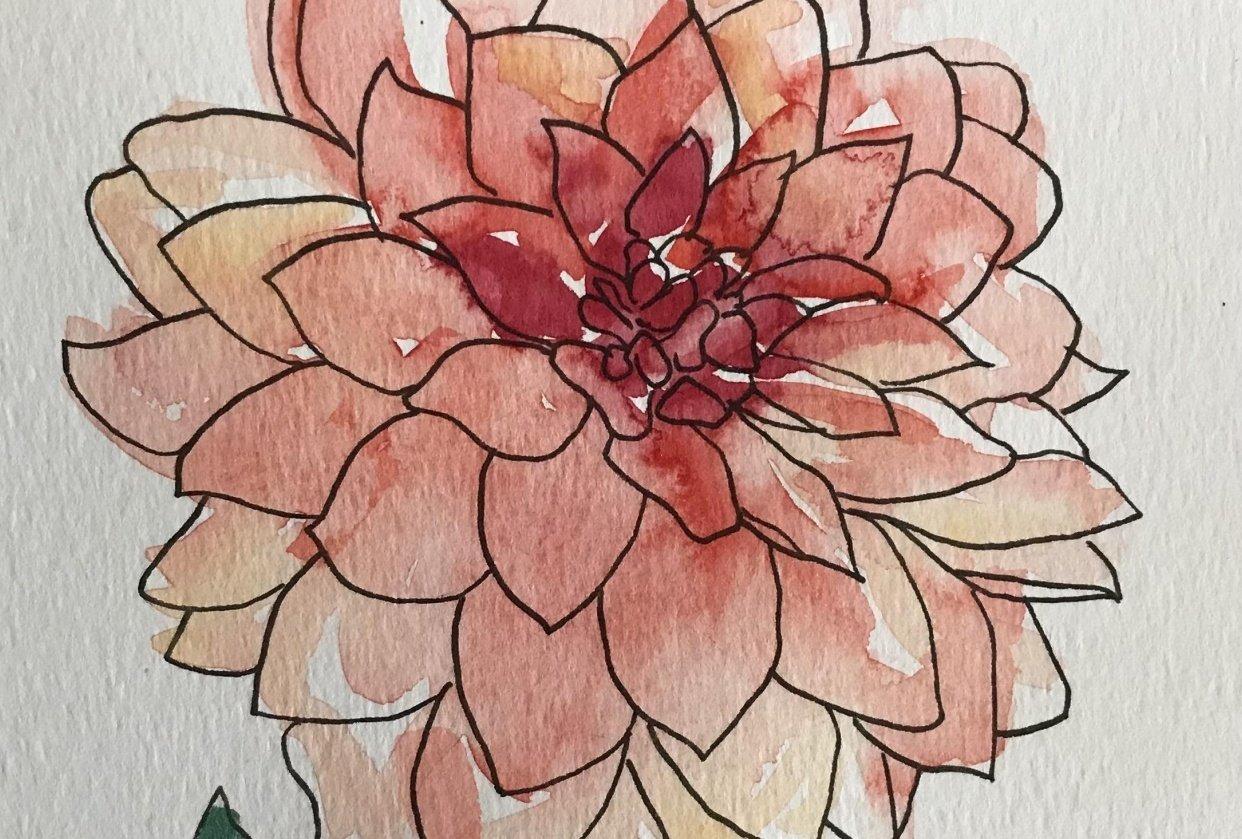 Watercolour dahlias - student project