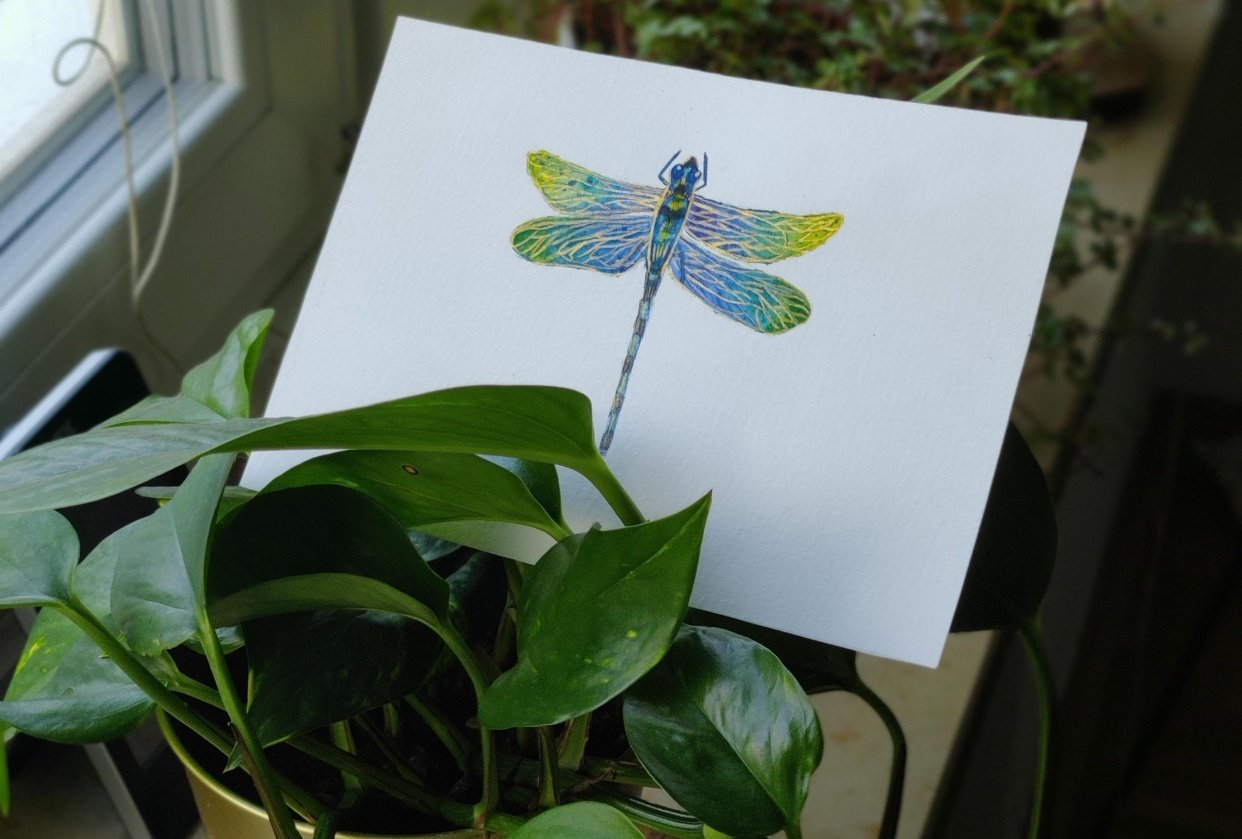 Dragonfly - student project