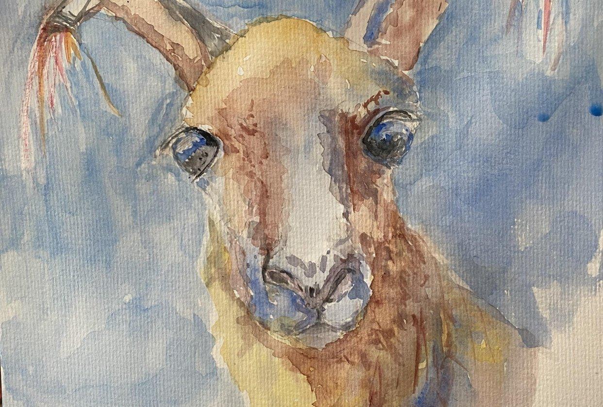 Cute Alpaca - student project