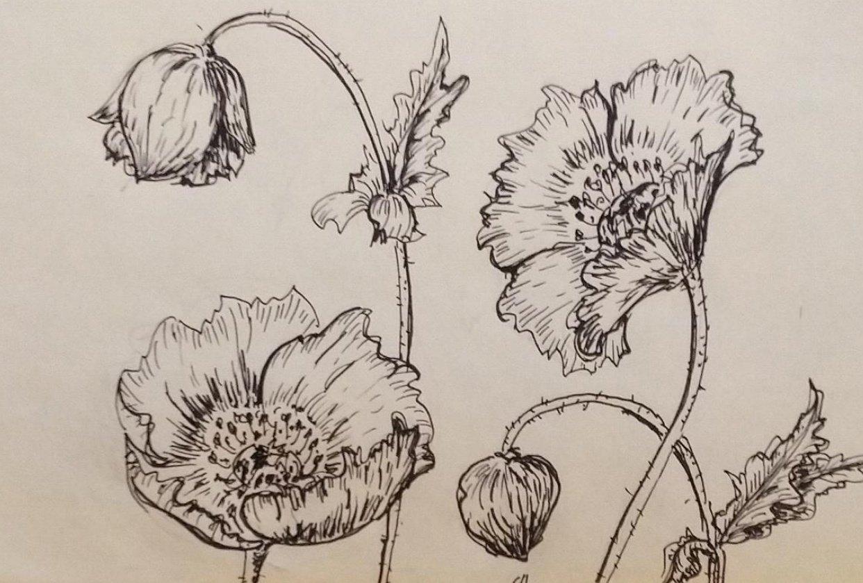 Poisonous Plants Line Drawing - student project