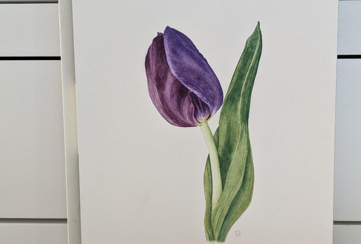 Watercolour Tulip - student project