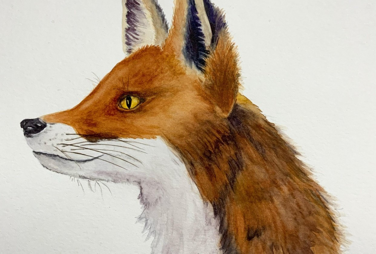 Painting Animal Textures - Fur - student project