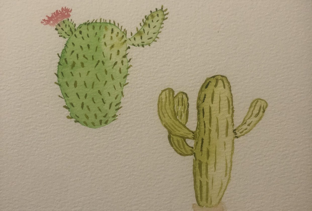 Beaver tail cactus and saguaro - student project
