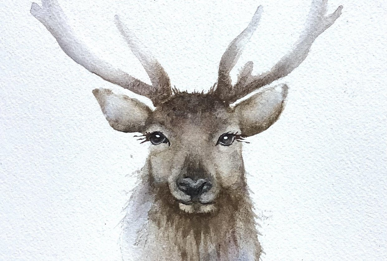 Friendly stag - student project
