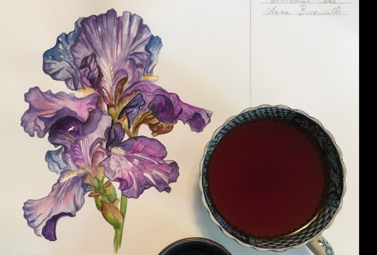 Iris Project - student project