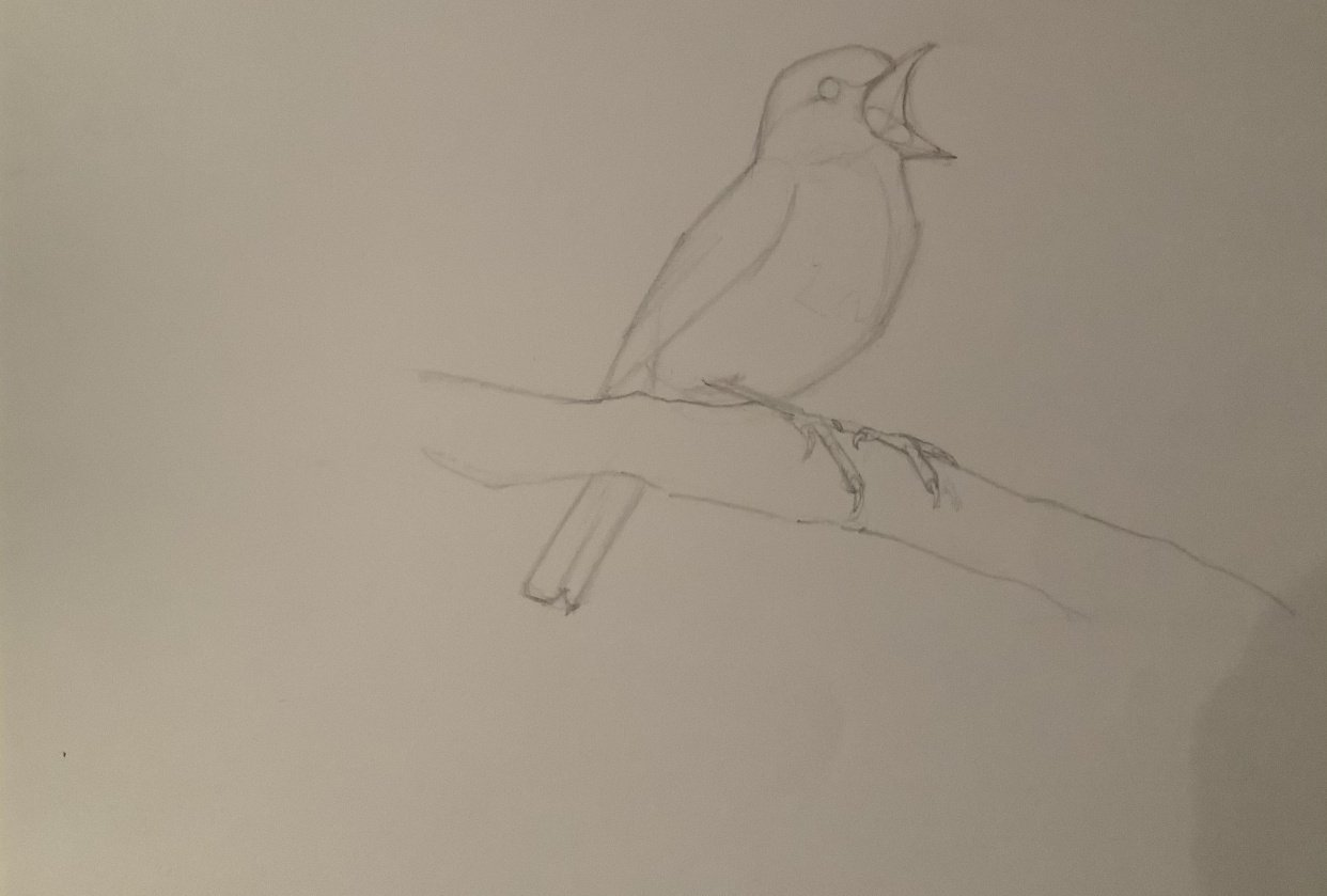 Basic skills / Getting started with drawing - exercises - student project