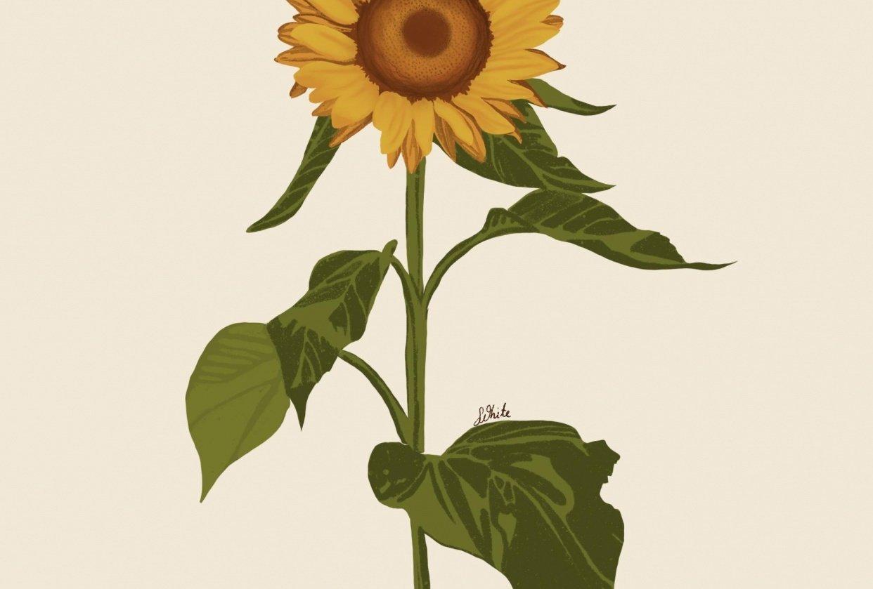 Sunflower procreate - student project