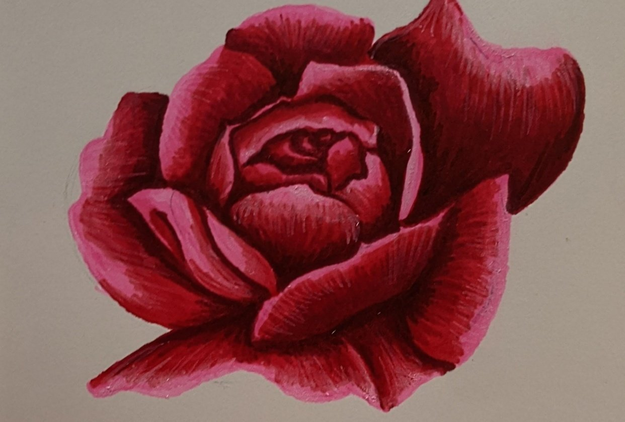 Alcohol Marker Rose - student project