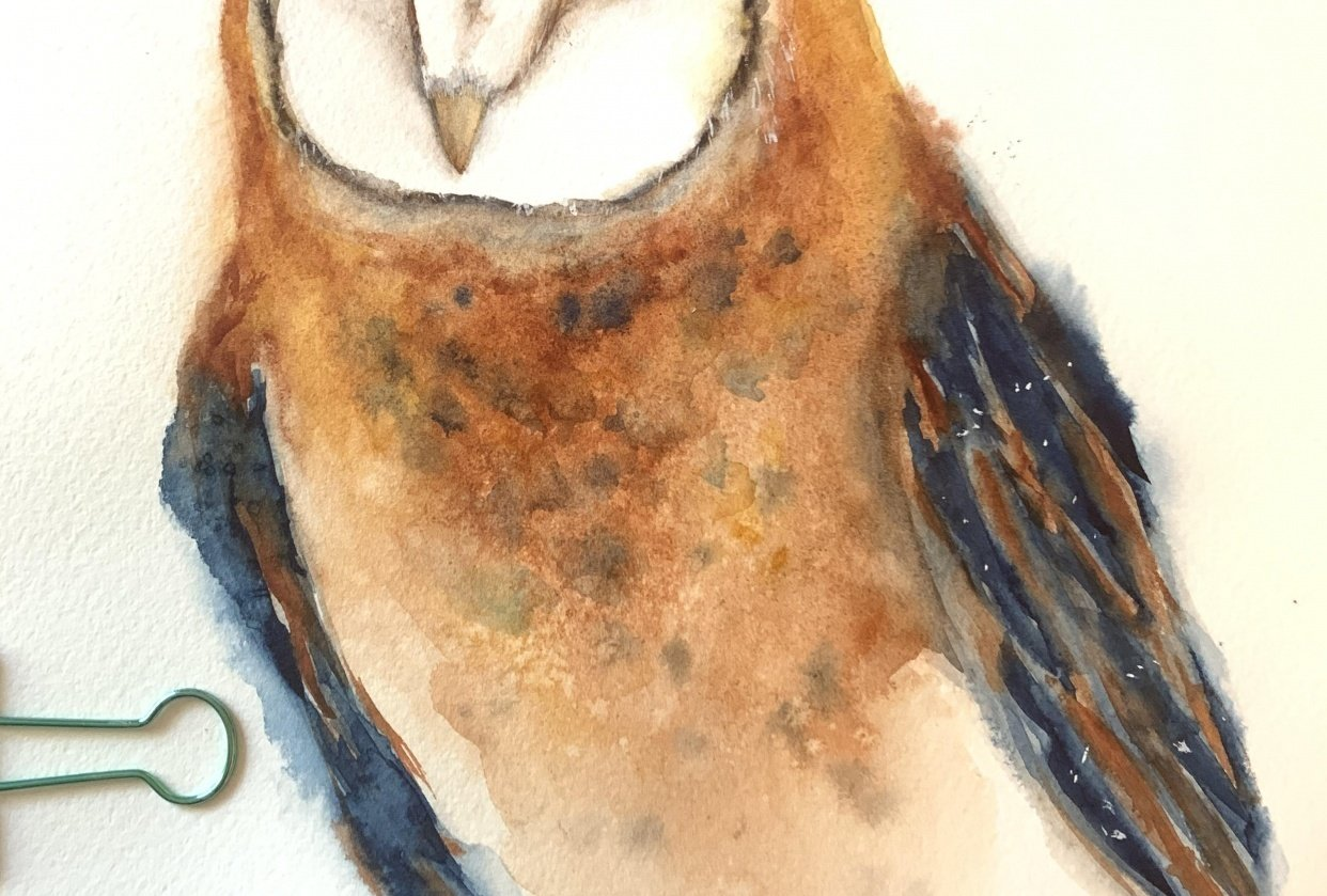 Barn owl - student project