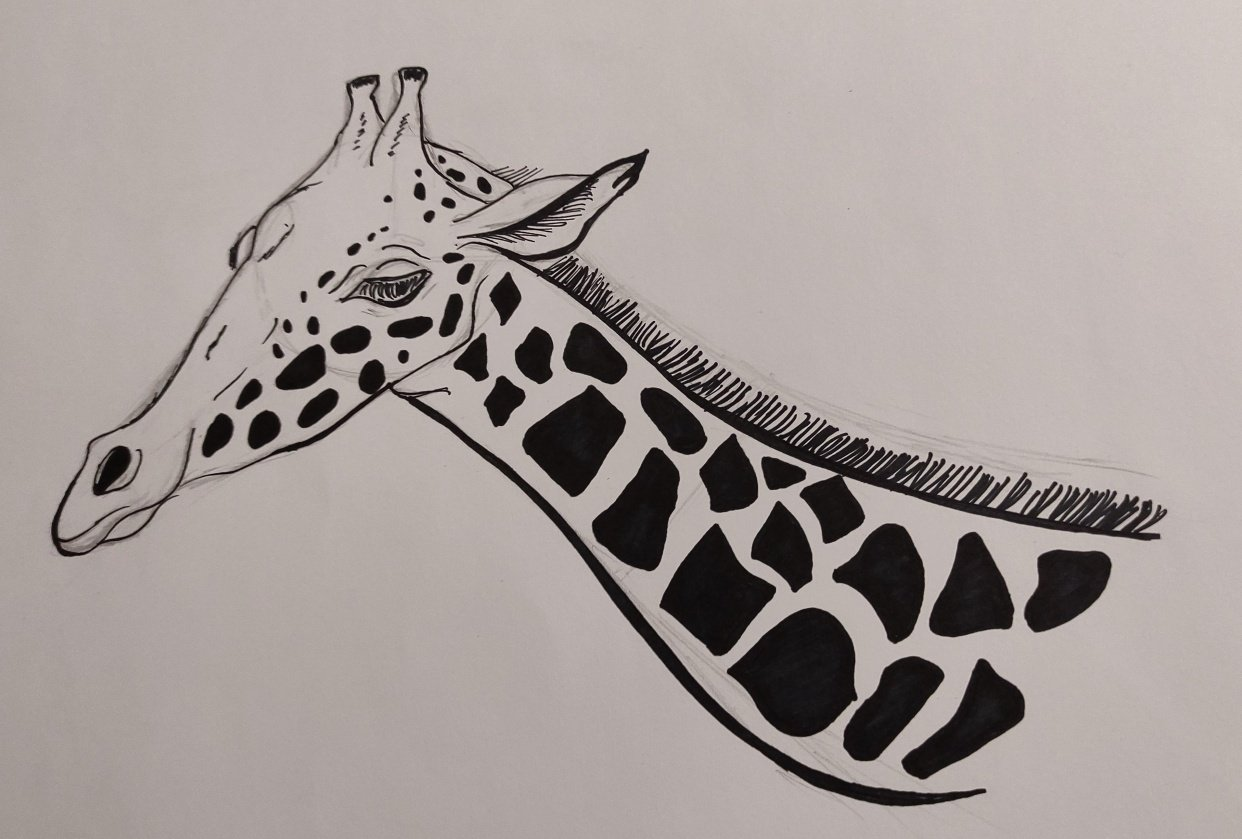 Giraffe, Bird and lotus - student project