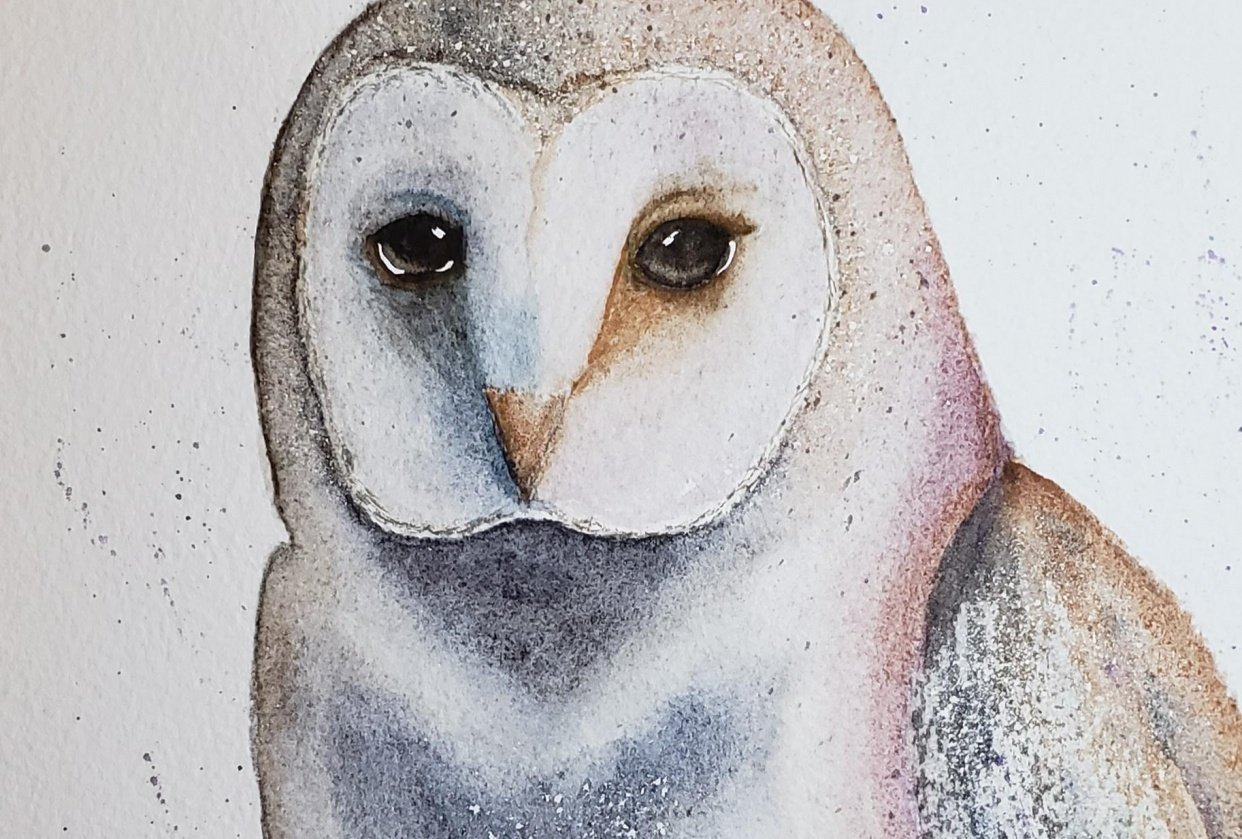 Third owl. - student project
