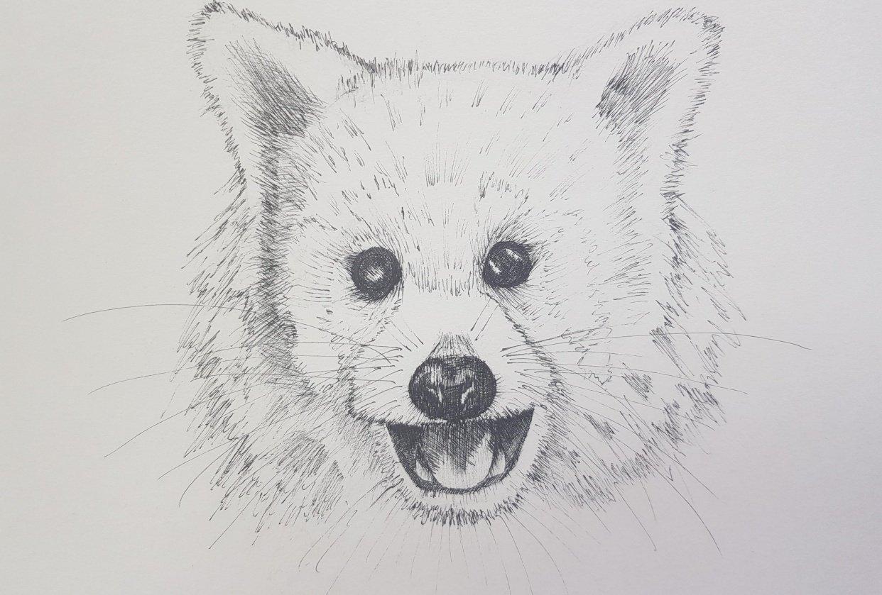 Red Panda, Blue Grosbeak, Chameleon - student project