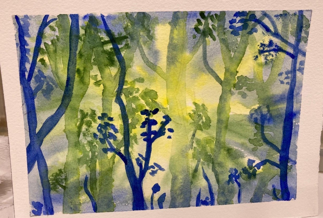 Forest 5-16-21 - student project