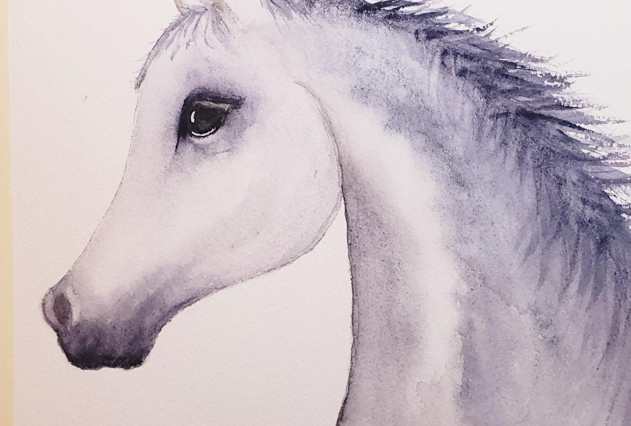 Horse - student project