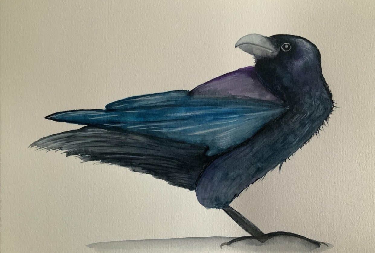 Colourful Raven - student project