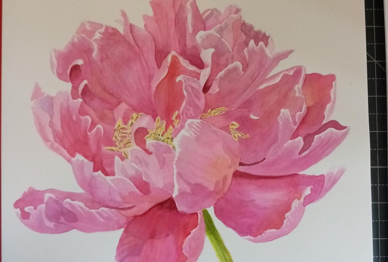 Watercolour Peony - student project