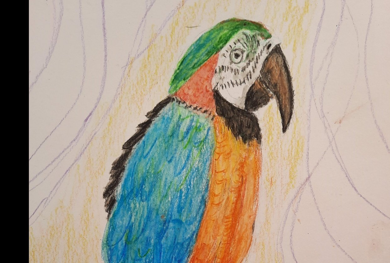 Macaw - student project