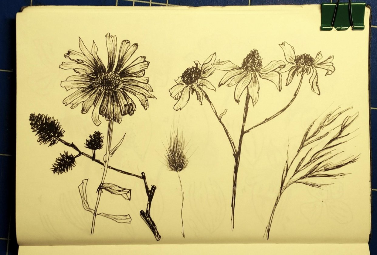 Botanical Line Drawing - student project