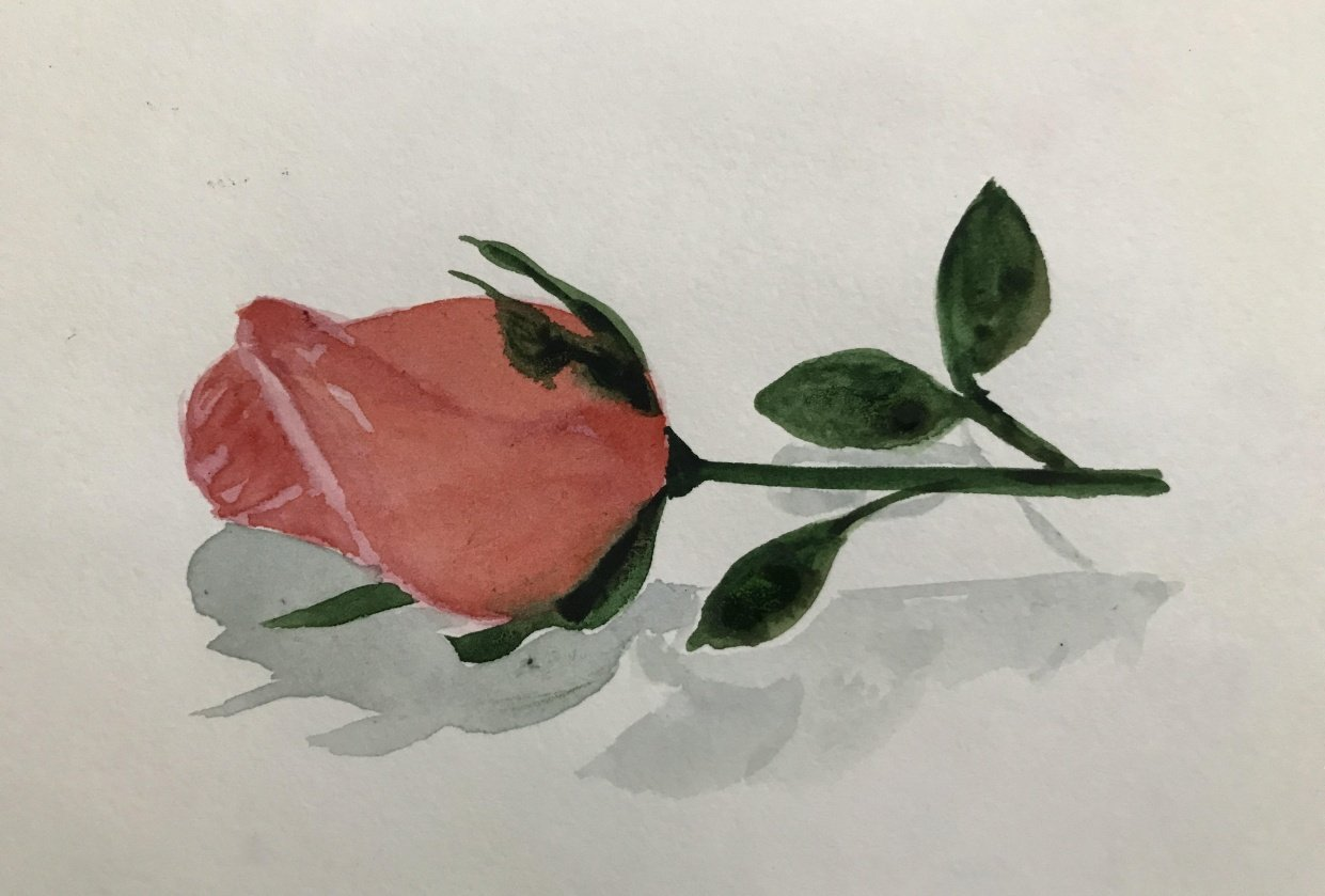 Rose - student project