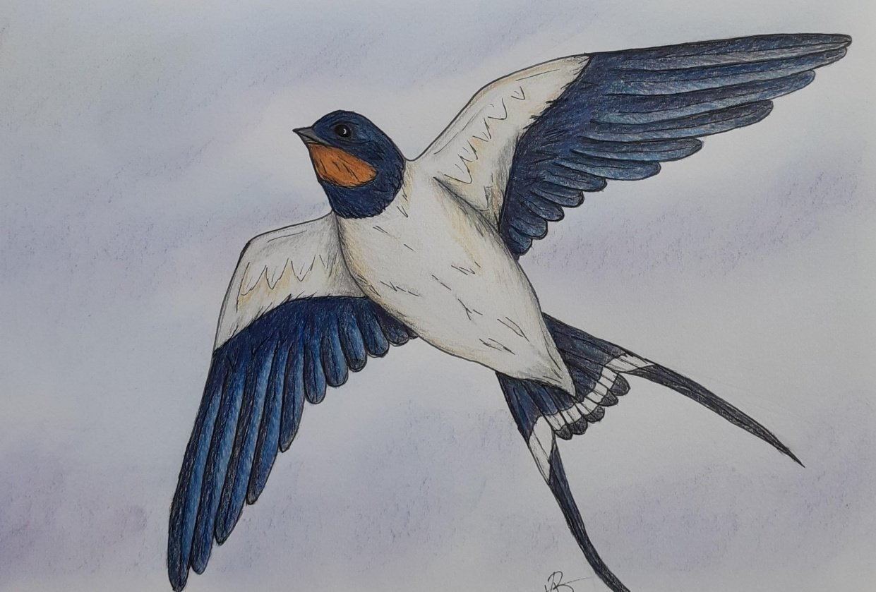 Swallow - student project