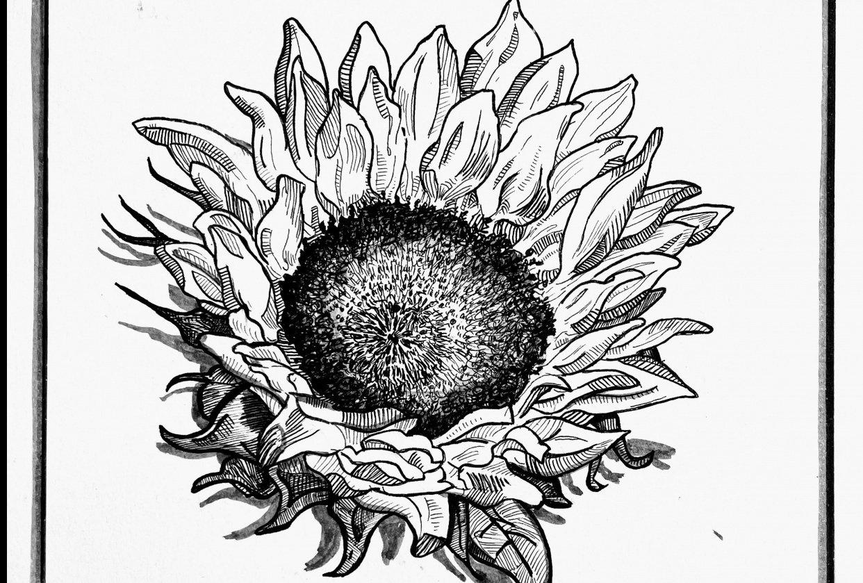 Magnolia, Sunflower, Rose - student project