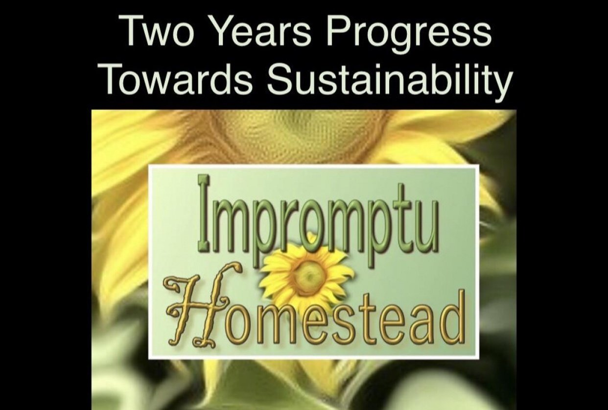 My Impromptu Homestead - student project