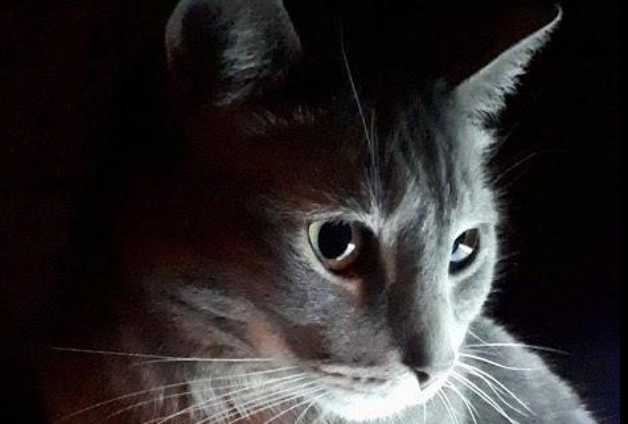 Cat & light as a metaphor - student project