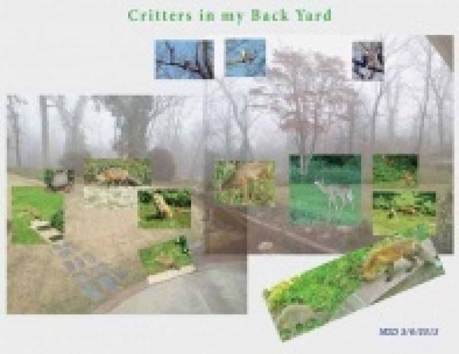 Critters in My Back Yard -- Next Round - student project