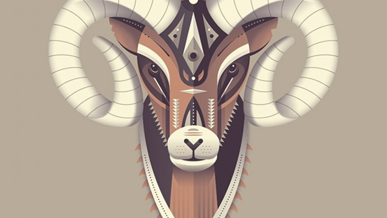 Bighorn Sheep - student project