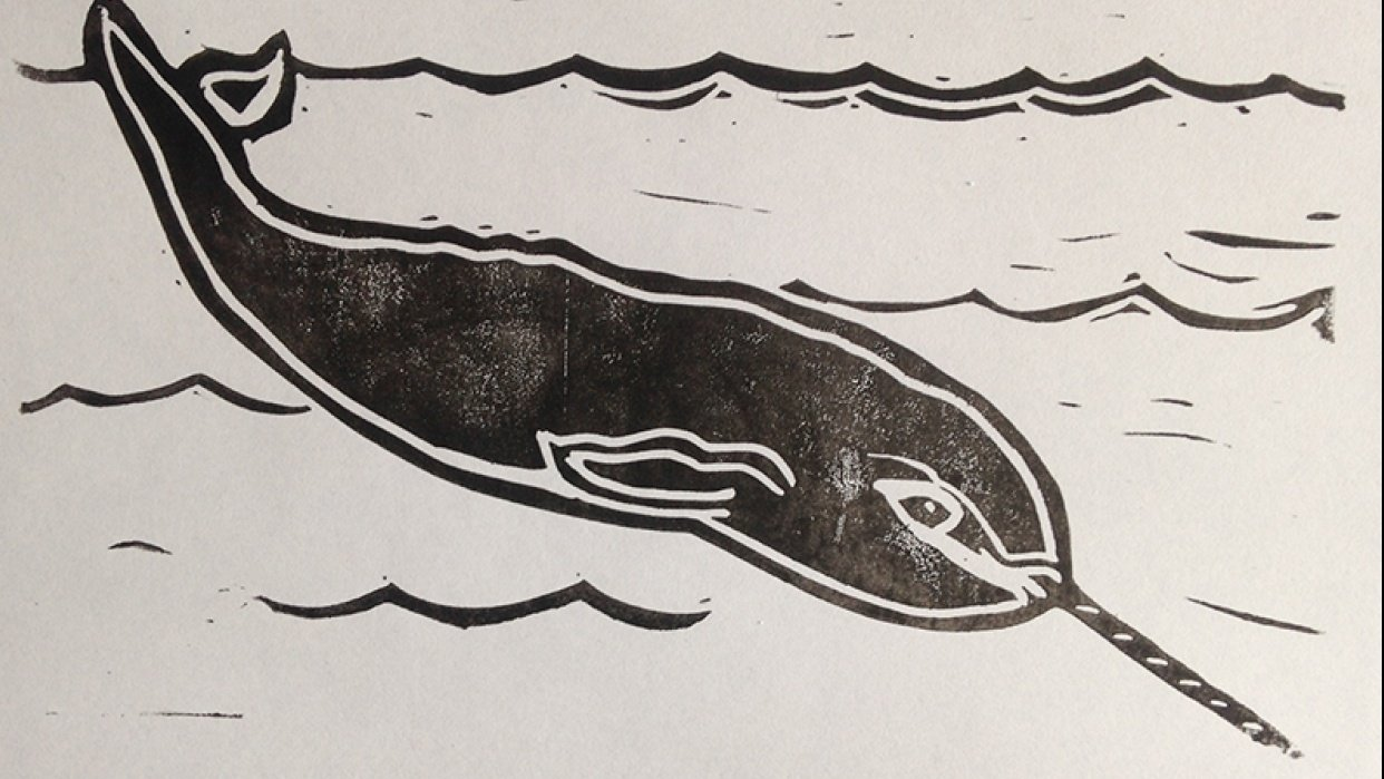 Narwhal Prints - student project