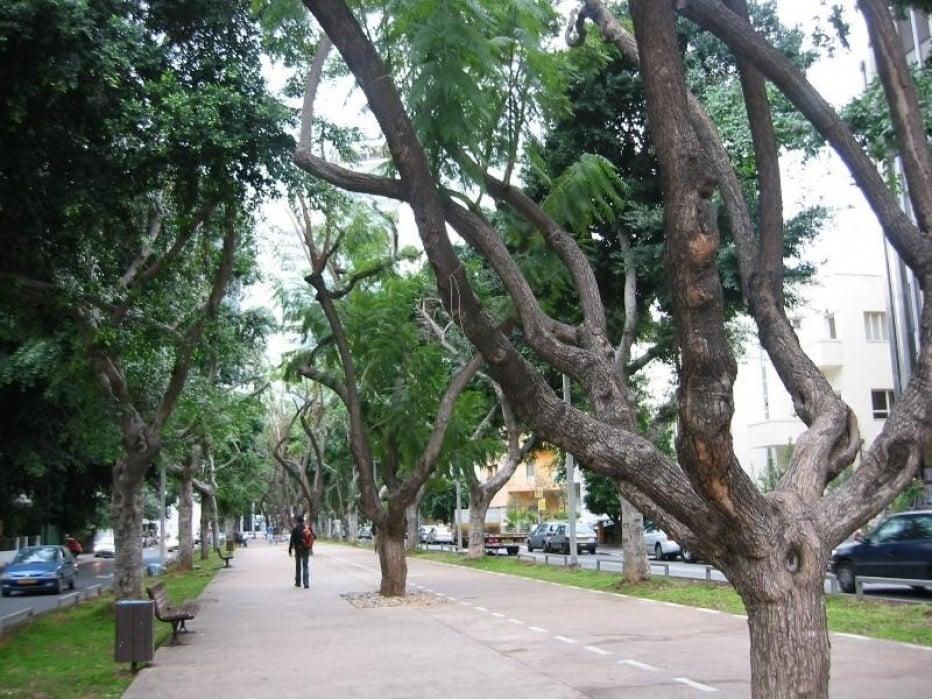 Rothschild Boulevard, Tel Aviv - student project