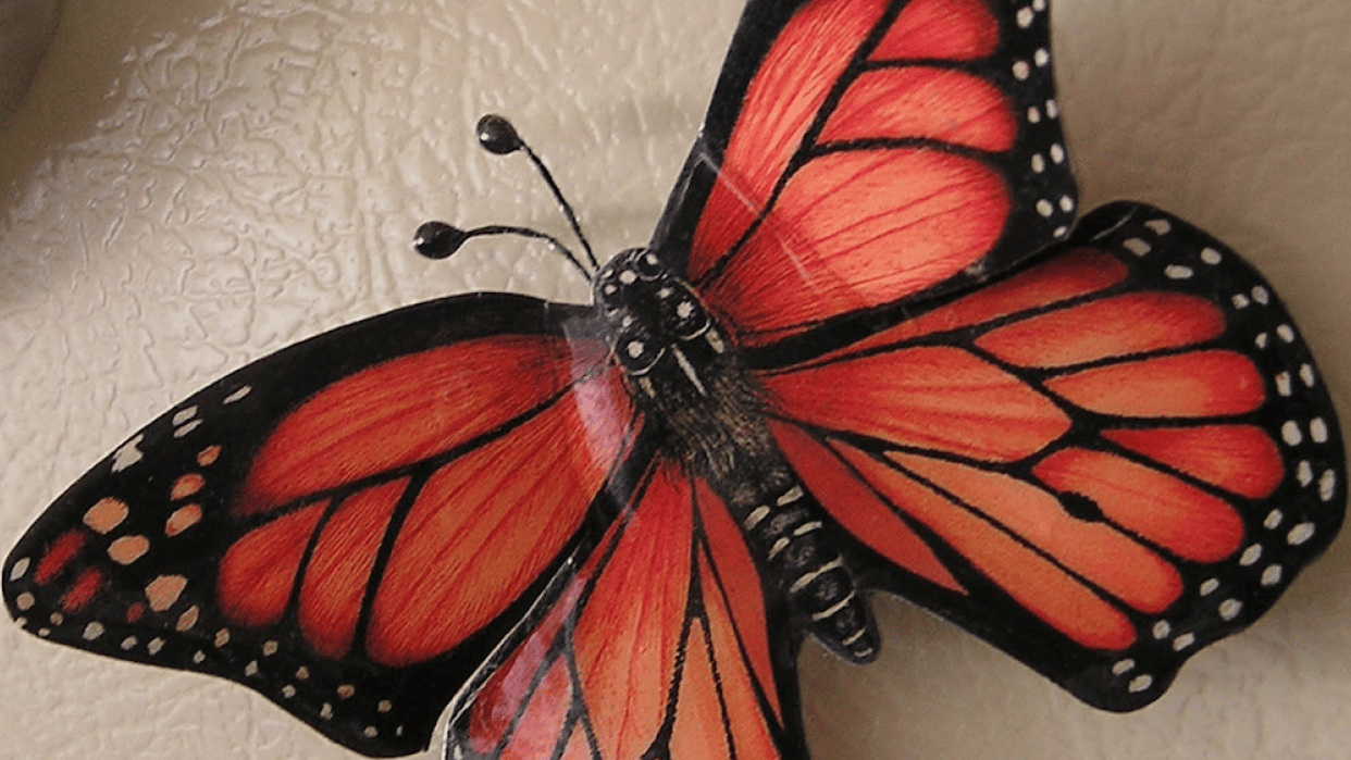 Free as a Butterfly - student project