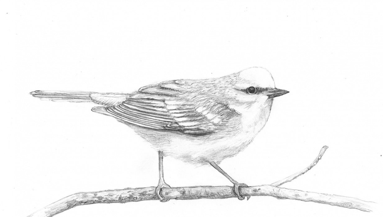 Pretty Little Birdie - student project