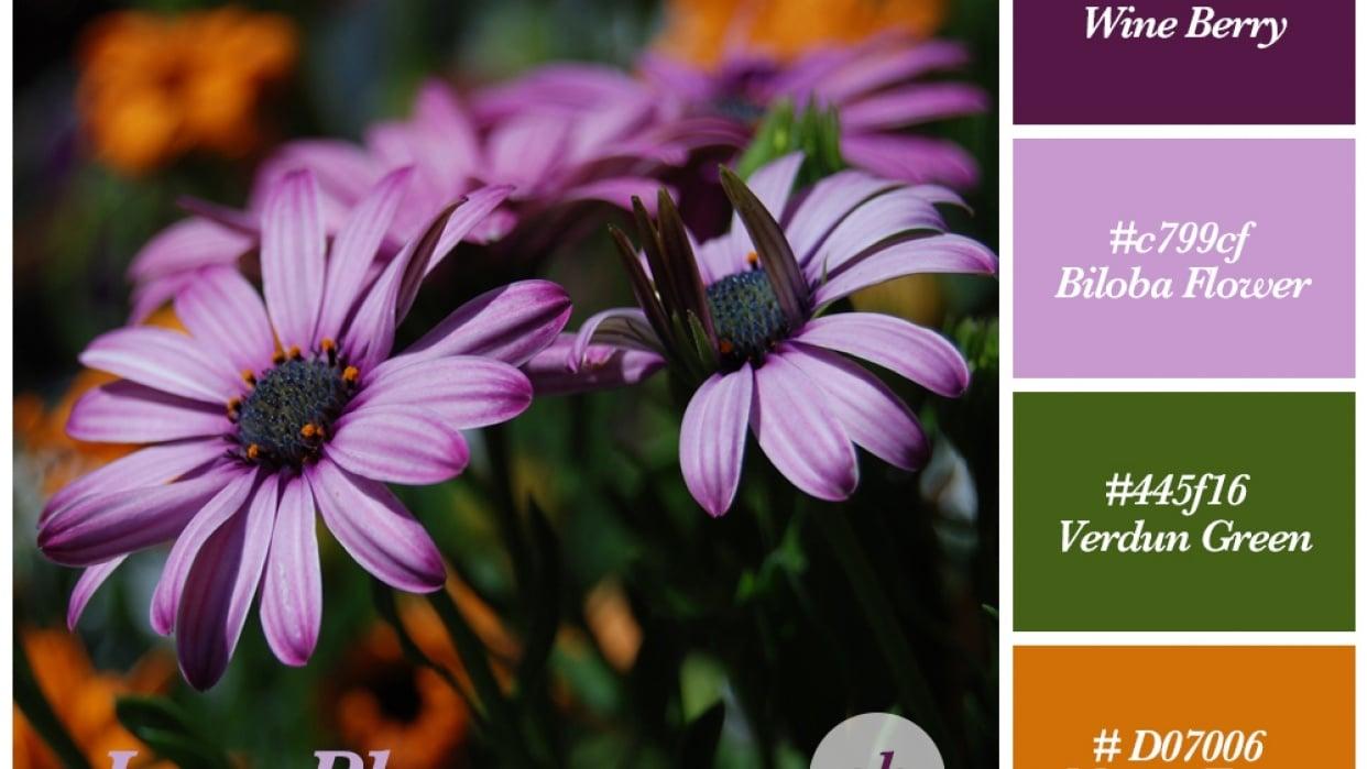June Blooms Color Scheme - student project
