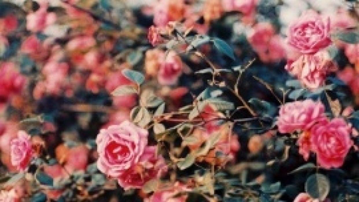 FINAL - Florals - student project