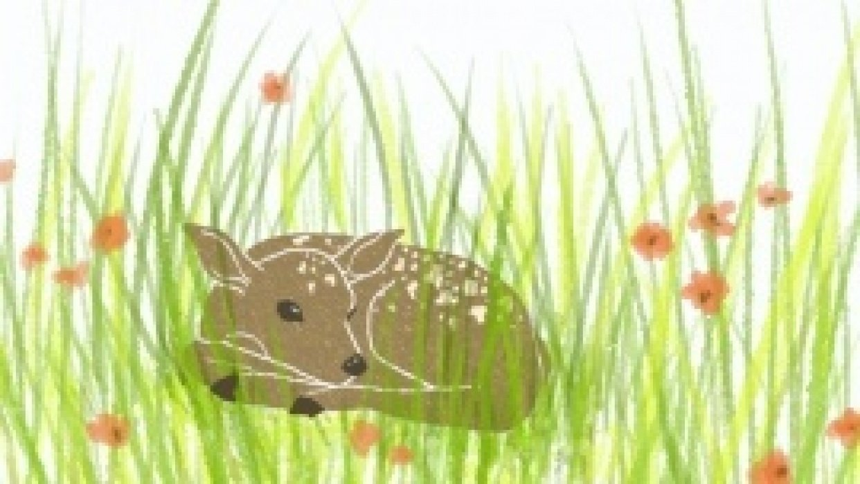 Resting Fawn - student project