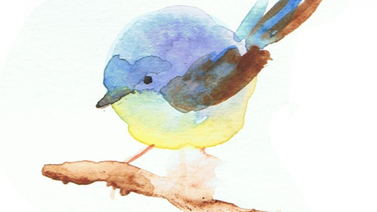 chubby little circle birds - student project